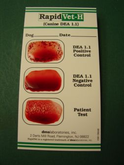 Rapid Vet-H Canine Blood Typing Rapid Test