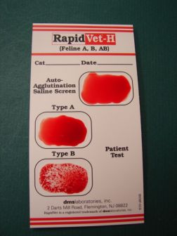 Rapid Vet-H Feline Blood Typing Rapid Test